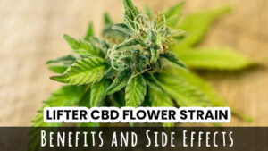 lifter cbd flower strain blog