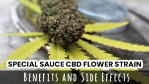 Special Sauce CBD Flower Strain